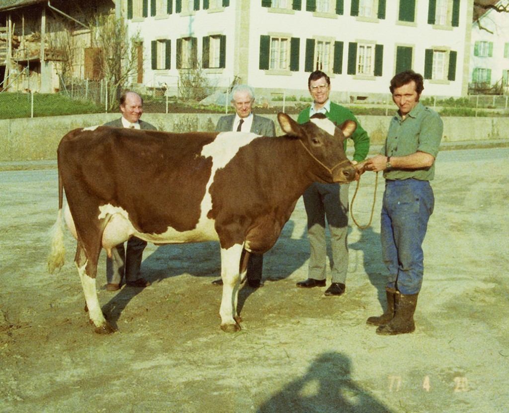 1977: First milking daughter of Triple Threat in Switzerland Cow: Schrago Triple Ortensia Red Picture: - Dr. Robert Walton (director of ABS, second from right) on his first trip to Switzerland - Dr. Otto Dramm from AI Hannover, Germany (first from left) - Alain Du Colombier Bovec, France (second from left) - André Schrago on the halter