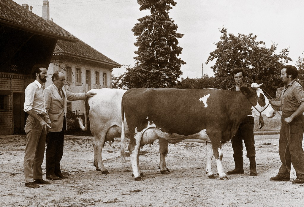 1977: Larry Moore's first visit to Switzerland Cow: Schrago Jack Helvetia Red, first milking daughter of L.M. Jack Red in Switzerland. Picture: Larry Moore with J-L Schrago, André & Aloys Schrago