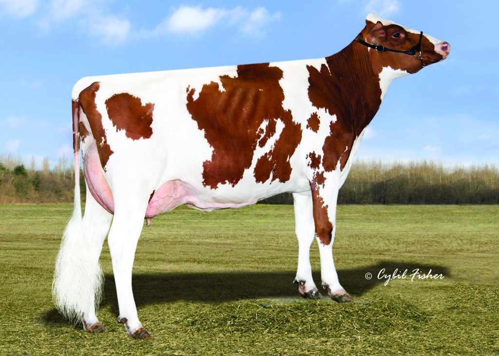 Synergy Absolute Loopdelou Red EX-90 USA Mother / Mutter / Mère / Madre of TRUMP-P-RED 2-00 295 24'630 lbs. (11'195 kg) 4,6% F 3,8% Protein 3-00 365 36'410 lbs. (16'550 kg) 4,4% F 4,0% Protein Owner / Besitzer / Propriétaire / Propietario: Synergy Family Dairy, Pulaski, WI, USA