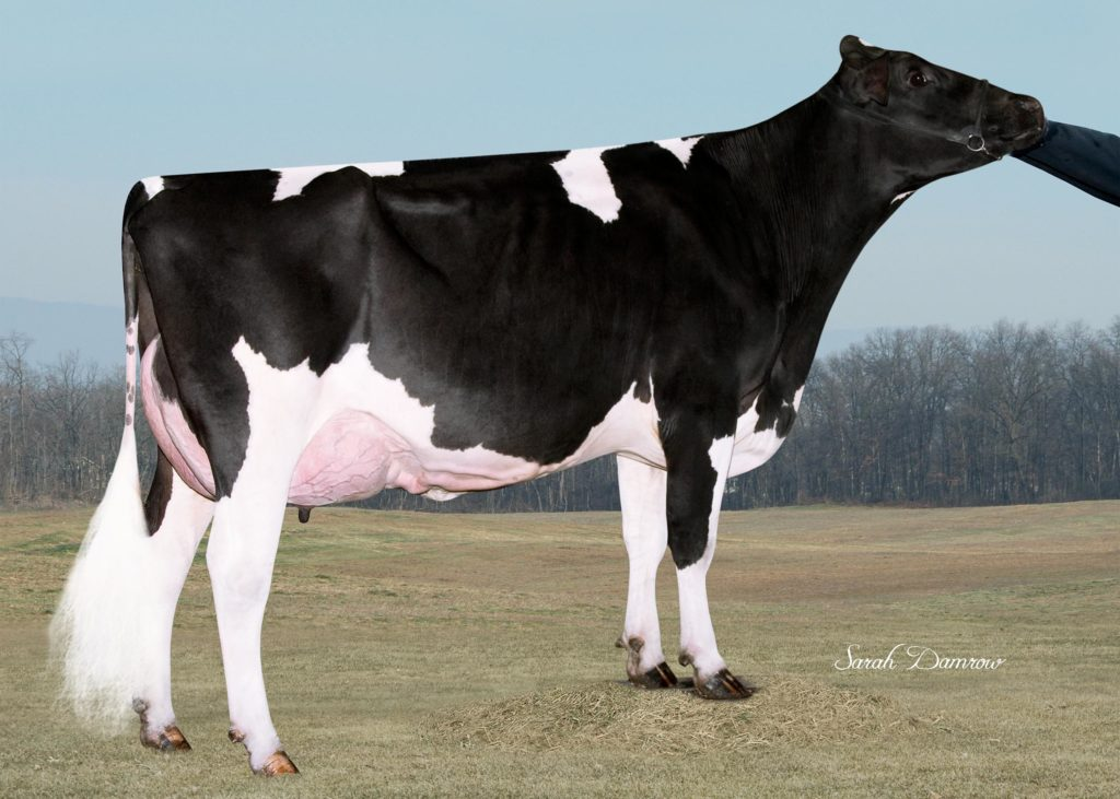 D & D Beacon Mogul CASEY RF P NC USA Mother / Mutter / Mère / Madre of GOLDWYN-P-RED Owner / Besitzer / Propriétaire / Propietario: Dennis Gransee, Minnesota, USA