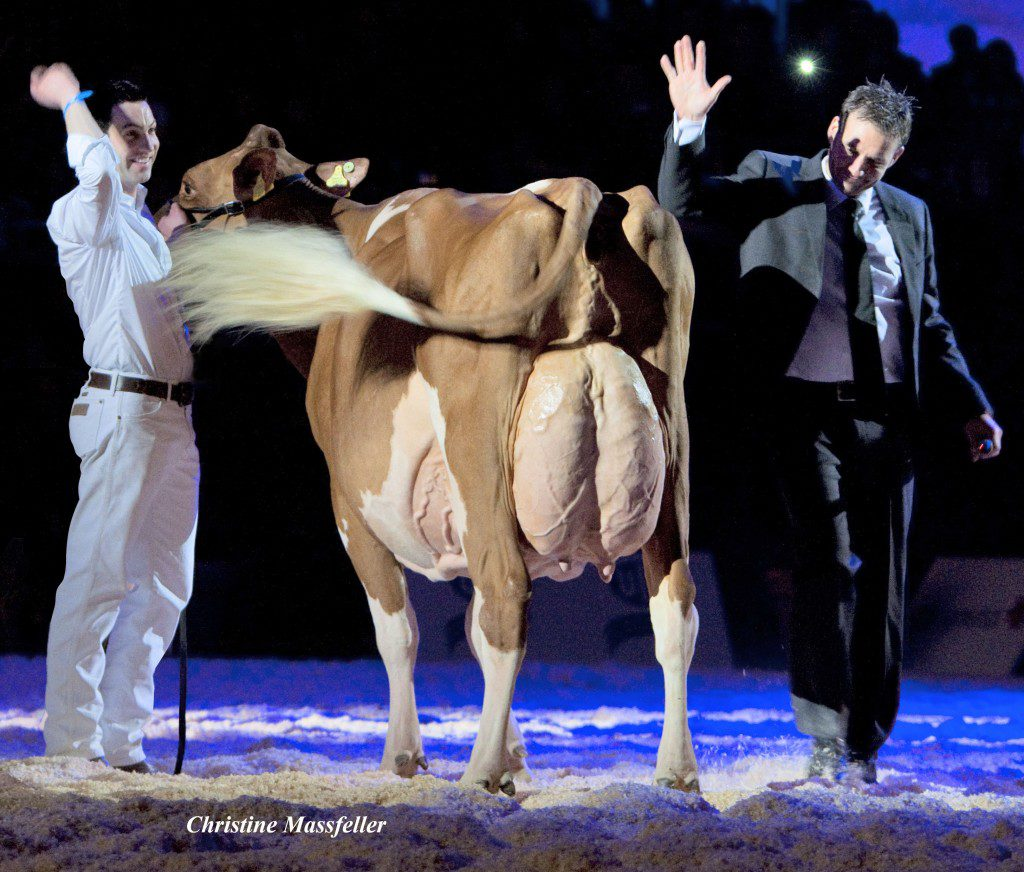 "2013: The magic moment when Suard Jordan Irene Red EX-96 was elected as ""European RH champion 2013"" This picture taken by Christine Massfeller from the Holstein International magazine and was considered by many breeders to be ""The picture of the year 2013"". Christine was able to take this picture when the European judge (Mr. Niels Erik Haahr from Denmark) nominated Irene Red EX-96 as ""European RH champion 2013"". At the holder, Mr. Thomas Ender was celebrating this victory as well. Just after the show, the judge Niels Erik Haahr, Mr. Thomas Ender at the holder and the Schrago family celebrated this historical victory for Switzerland and Ja-Bob Jordan Red (father of Irene Red)."
